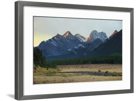 Moose Grazing at Sunset with Mountains in the Background; Alberta Canada-Design Pics Inc-Framed Art Print