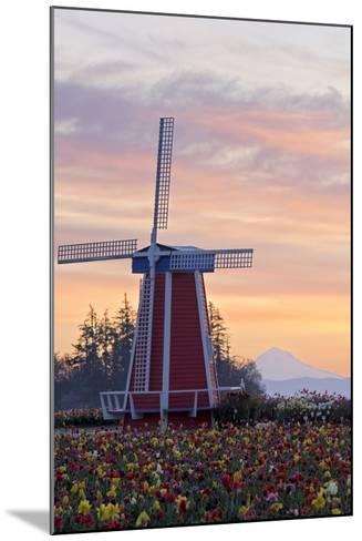 Sunrise over Wooden Shoe Tulip Farm and Mt. Hood; Woodburn, Oregon, USA-Design Pics Inc-Mounted Photographic Print