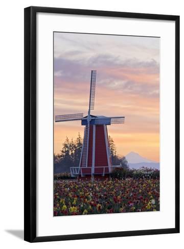 Sunrise over Wooden Shoe Tulip Farm and Mt. Hood; Woodburn, Oregon, USA-Design Pics Inc-Framed Art Print