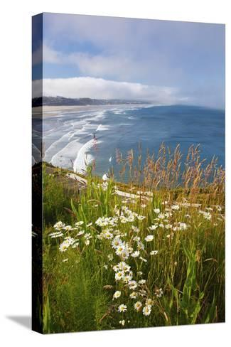 Wildflowers Along Yaquina Head; Newport Oregon United States of America-Design Pics Inc-Stretched Canvas Print