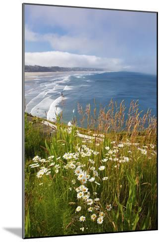Wildflowers Along Yaquina Head; Newport Oregon United States of America-Design Pics Inc-Mounted Photographic Print