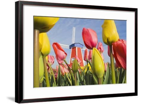 Windmill and Tulips at Wooden Shoe Tulip Farm; Woodburn, Oregon, USA-Design Pics Inc-Framed Art Print