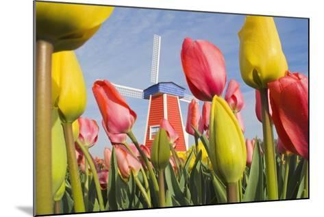 Windmill and Tulips at Wooden Shoe Tulip Farm; Woodburn, Oregon, USA-Design Pics Inc-Mounted Photographic Print