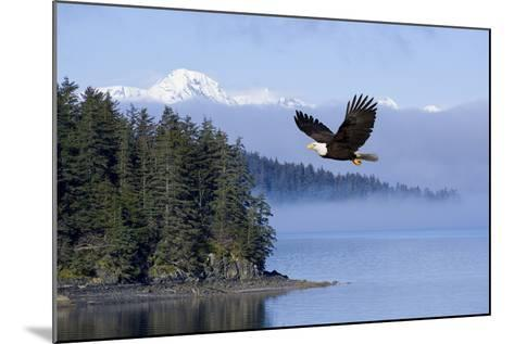Bald Eagle in Flight over the Inside Passage with Tongass National Forest in the Background, Alaska-Design Pics Inc-Mounted Photographic Print