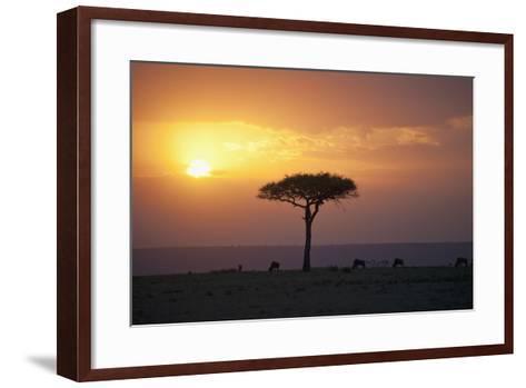 Acacia Trees at Sunset, Mara River, Maasai Mara, Kenya, Africa-Design Pics Inc-Framed Art Print