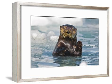 A Sea Otter Swimming Amongst Sea Ice in Harriman Fjord, Prince William Sound, Southcentral Alaska-Design Pics Inc-Framed Art Print
