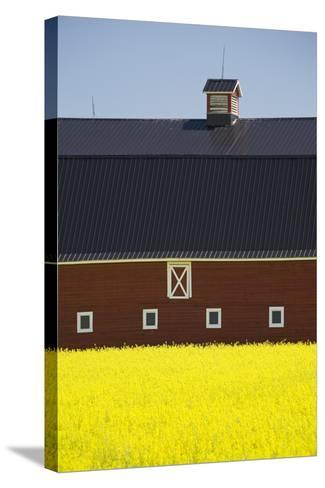 Front of a Red Barn in a Flowering Canola Field with Blue Sky South of High River; Alberta Canada-Design Pics Inc-Stretched Canvas Print