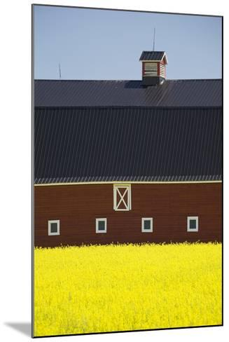 Front of a Red Barn in a Flowering Canola Field with Blue Sky South of High River; Alberta Canada-Design Pics Inc-Mounted Photographic Print