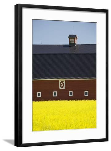 Front of a Red Barn in a Flowering Canola Field with Blue Sky South of High River; Alberta Canada-Design Pics Inc-Framed Art Print
