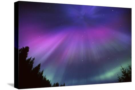 Aurora Corona over Crow Creek Sc Alaska Winter-Design Pics Inc-Stretched Canvas Print