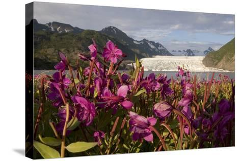 Dwarf Fireweed Growing on the Shoreline of Grewingk Glacier Lake with Glacier in Background-Design Pics Inc-Stretched Canvas Print