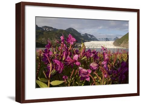 Dwarf Fireweed Growing on the Shoreline of Grewingk Glacier Lake with Glacier in Background-Design Pics Inc-Framed Art Print