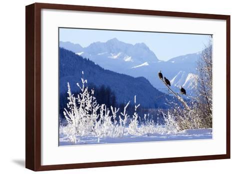 Bald Eagles Perched-Design Pics Inc-Framed Art Print