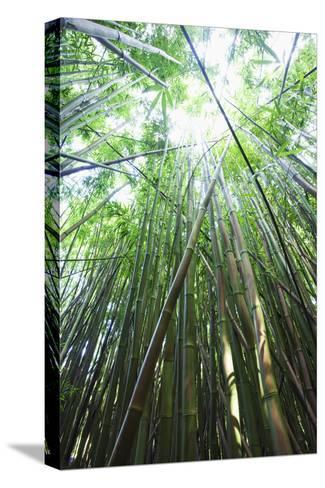 Hawaii, Maui, Hana, a Path Through Green Bamboo-Design Pics Inc-Stretched Canvas Print