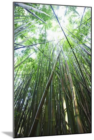Hawaii, Maui, Hana, a Path Through Green Bamboo-Design Pics Inc-Mounted Photographic Print