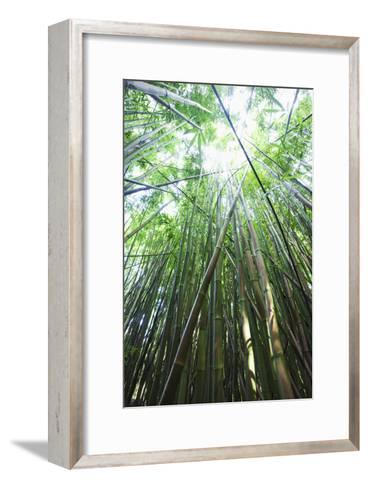 Hawaii, Maui, Hana, a Path Through Green Bamboo-Design Pics Inc-Framed Art Print