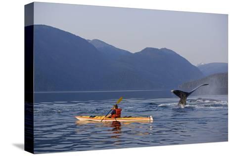 Man Sea Kayaking Near Swimming Pod of Humpback Whales Inside Passage Southeast Alaska Summer-Design Pics Inc-Stretched Canvas Print