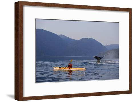 Man Sea Kayaking Near Swimming Pod of Humpback Whales Inside Passage Southeast Alaska Summer-Design Pics Inc-Framed Art Print