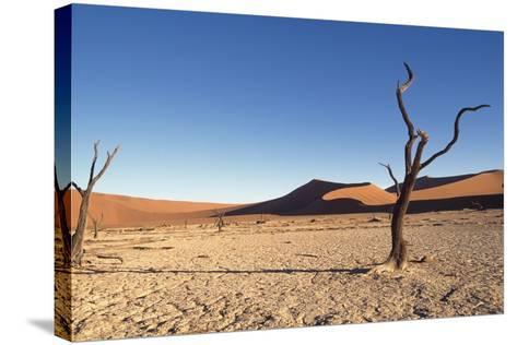 Desert Landscape-Design Pics Inc-Stretched Canvas Print