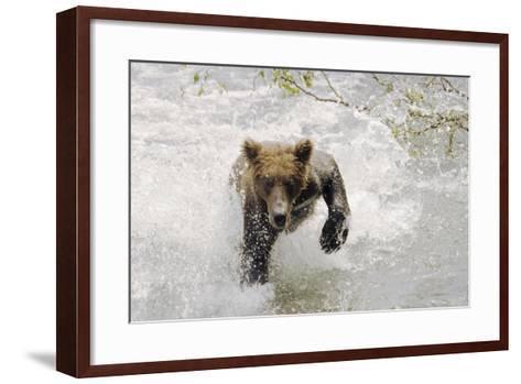 Brown Bear Charging Through Water Brooks River Katmai National Park Southwest Alaska Summer-Design Pics Inc-Framed Art Print