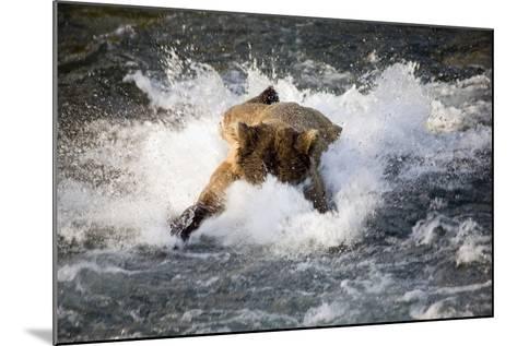 Brown Bear Dives into Brooks River for Salmon Katmai National Park Southwest Alaska Summer-Design Pics Inc-Mounted Photographic Print
