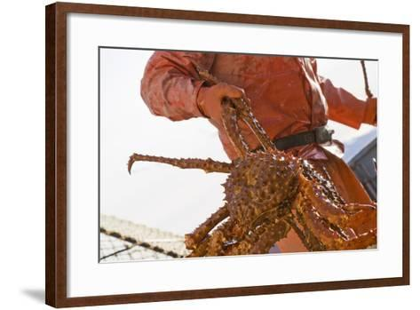 Crab Fisherman Carries a Brown Crab to the Hold of the F-Design Pics Inc-Framed Art Print