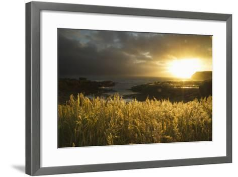 Sunlight Glowing at Sunset and Illuminating the Tall Grass at the Water's Edge-Design Pics Inc-Framed Art Print