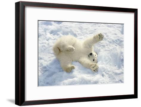 Polar Bear Cub Playing in Snow Alaska Zoo-Design Pics Inc-Framed Art Print
