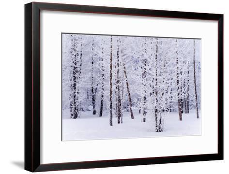 Frost Covered Cottonwood Trees Near Portage Ak Sc Winter Digital Filter-Design Pics Inc-Framed Art Print