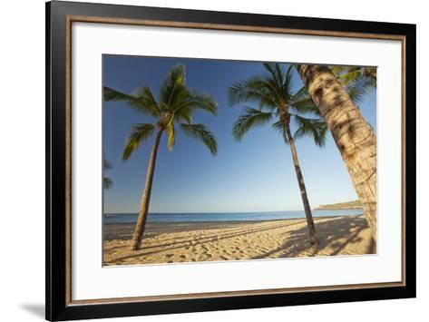 Hawaii, Lanai, Hulopoe Beach, Tall Palm Trees on a Beautiful Beach-Design Pics Inc-Framed Art Print