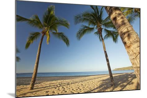 Hawaii, Lanai, Hulopoe Beach, Tall Palm Trees on a Beautiful Beach-Design Pics Inc-Mounted Photographic Print