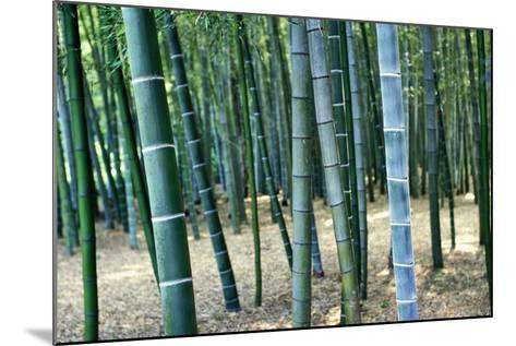 Bamboo Tree Forest, Close Up-Design Pics Inc-Mounted Photographic Print