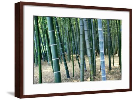 Bamboo Tree Forest, Close Up-Design Pics Inc-Framed Art Print