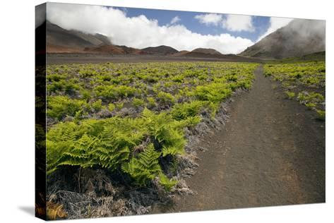 Hawaii, Maui, Haleakala, the Hiking Trail Through the Volcanic Crater-Design Pics Inc-Stretched Canvas Print