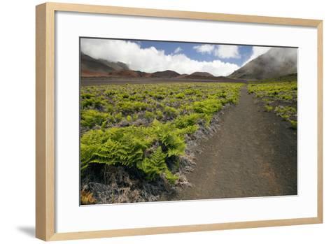 Hawaii, Maui, Haleakala, the Hiking Trail Through the Volcanic Crater-Design Pics Inc-Framed Art Print