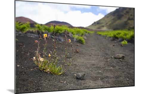 Hawaii, Maui, Haleakala, the Hiking Trail Through the Volcanic Crater-Design Pics Inc-Mounted Photographic Print