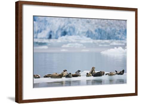 Harbor Seals Rest on an Iceberg with Dawes Glacier-Design Pics Inc-Framed Art Print