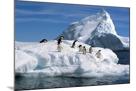 Adelie Penguins Jump from Iceberg Paulet Is Antarctic Summer-Design Pics Inc-Mounted Photographic Print