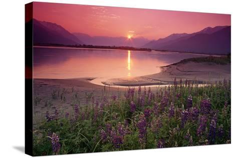 Sunrise Twentymile River and Lupine Sc Ak Summer Scenic-Design Pics Inc-Stretched Canvas Print