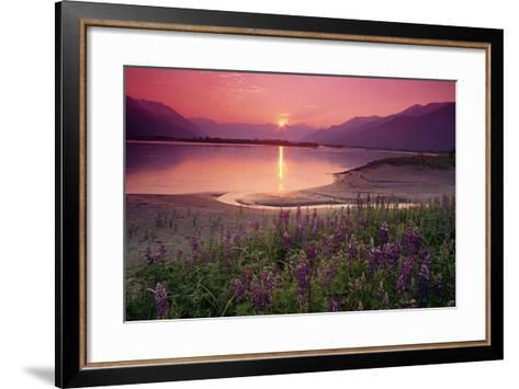 Sunrise Twentymile River and Lupine Sc Ak Summer Scenic-Design Pics Inc-Framed Art Print