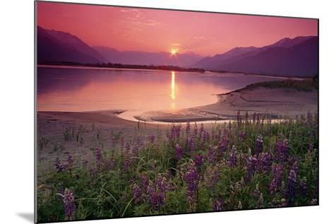 Sunrise Twentymile River and Lupine Sc Ak Summer Scenic-Design Pics Inc-Mounted Photographic Print