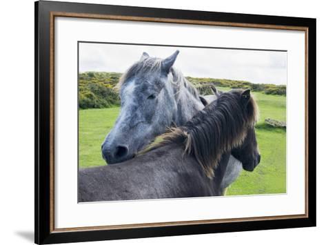 Horses on a Lush Green Field; Devon, England-Design Pics Inc-Framed Art Print