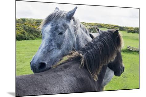 Horses on a Lush Green Field; Devon, England-Design Pics Inc-Mounted Photographic Print