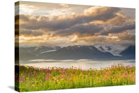 Field of Fireweed on Hill Overlooking Kachemak Bay and Grewingk Glacier-Design Pics Inc-Stretched Canvas Print