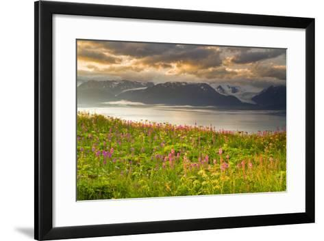 Field of Fireweed on Hill Overlooking Kachemak Bay and Grewingk Glacier-Design Pics Inc-Framed Art Print