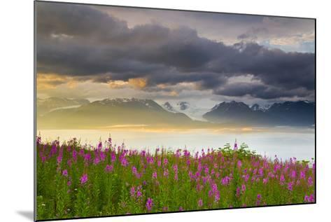 Field of Fireweed on Hill Overlooking Kachemak Bay and Grewingk Glacier-Design Pics Inc-Mounted Photographic Print