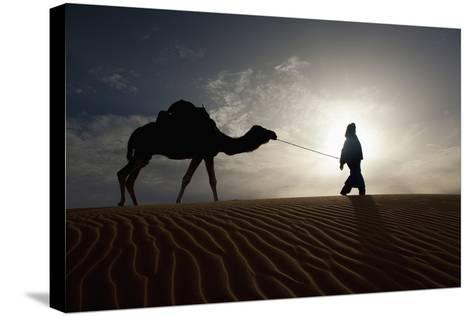 Silhouette of Berber Leading Camel across Sand Dunes at Dusk in the Erg Chebbi-Design Pics Inc-Stretched Canvas Print