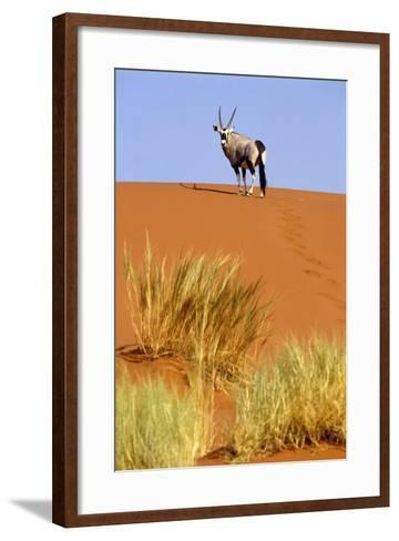 Ram on Sand Dune in Sossusvlei-Design Pics Inc-Framed Art Print