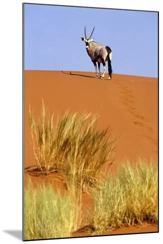 Ram on Sand Dune in Sossusvlei-Design Pics Inc-Mounted Photographic Print