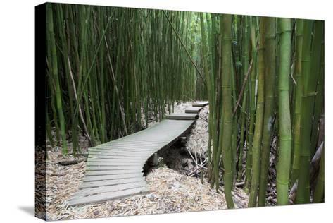 Hawaii, Maui, Kipahulu, Haleakala National Park, Trail Through Bamboo Forest on the Pipiwai Trail-Design Pics Inc-Stretched Canvas Print